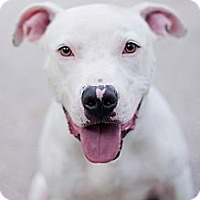 Adopt A Pet :: Angus - Reisterstown, MD