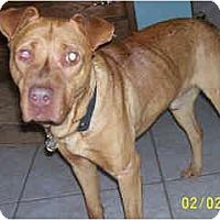 Adopt A Pet :: Percy - Scottsdale, AZ