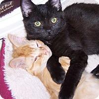 Adopt A Pet :: Eli - Richmond, VA