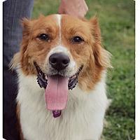 Adopt A Pet :: Milo-Adoption Pending - Fredericksburg, VA