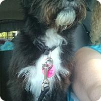 Adopt A Pet :: Kasey - Sheridan, OR