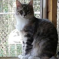Adopt A Pet :: Lacey - Ocala, FL