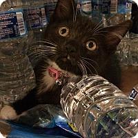 Adopt A Pet :: Sally - Horsham, PA