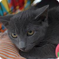 Adopt A Pet :: Bean - Brooklyn, NY