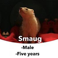 Adopt A Pet :: Smaug - Walker, LA