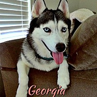 Adopt A Pet :: Georgia - Carrollton, TX