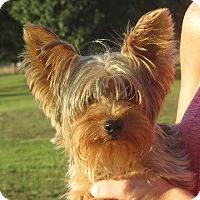 Adopt A Pet :: Davis - Rochester, NY