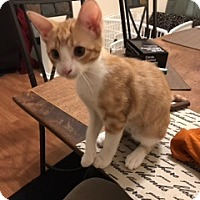 Adopt A Pet :: Edna - Kennedale, TX