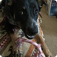 Adopt A Pet :: Winston - Portage, MI