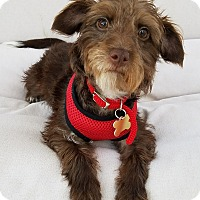 Adopt A Pet :: Kylee - Thousand Oaks, CA