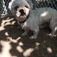 Adopt A Pet :: Kelly - Chesterfield, MO