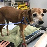 Adopt A Pet :: A757822 - Austin, TX