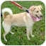 Photo 4 - Labrador Retriever Mix Dog for adoption in Columbia, Illinois - Lindy