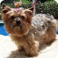 Adopt A Pet :: Missus - Tallahassee, FL