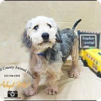 Adopt A Pet :: Dog - Jacksboro, TN