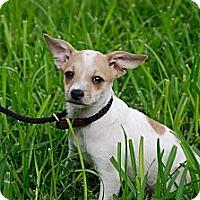 Adopt A Pet :: Oates - Houston, TX