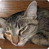 Adopt A Pet :: Candi - Davis, CA