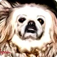 Adopt A Pet :: Alyssa-NY - Edmeston, NY
