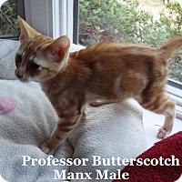 Adopt A Pet :: Professor Butterscotch - Bentonville, AR