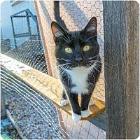 Adopt A Pet :: Oreo - Corinne, UT