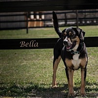 Adopt A Pet :: Bella - Middletown, NY
