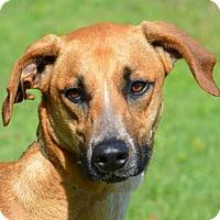 Adopt A Pet :: Bentley - Englewood, FL
