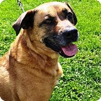 Adopt A Pet :: Nala - Radford, VA
