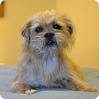 Adopt A Pet :: Gisela - Hagerstown, MD
