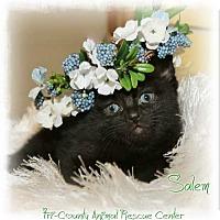 Adopt A Pet :: Salem - Shippenville, PA
