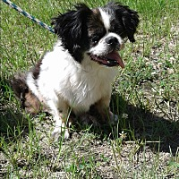 Adopt A Pet :: Peek-a-Boo - Barnwell, SC