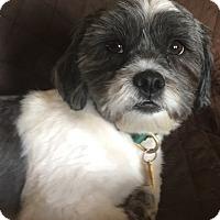 Adopt A Pet :: Polo - Cranford, NJ