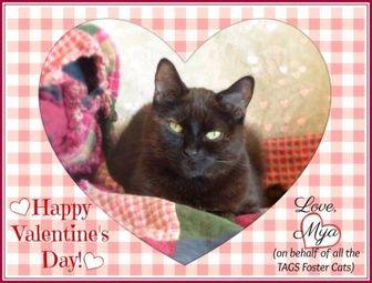 Domestic Shorthair/Domestic Shorthair Mix Cat for adoption in Blackstock, Ontario - Mya ~ Help Needed!