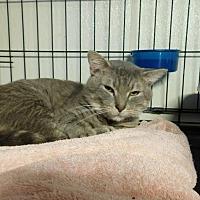 Adopt A Pet :: Sid - Winston-Salem, NC