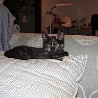 Adopt A Pet :: Thunder - Cleveland, OH