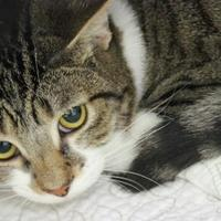 Adopt A Pet :: Monroe - Fairfax, VA