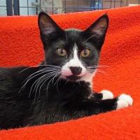 Adopt A Pet :: Hermione - Spokane Valley, WA