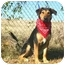 Photo 3 - Black and Tan Coonhound Mix Dog for adoption in Muldrow, Oklahoma - CAESAR II