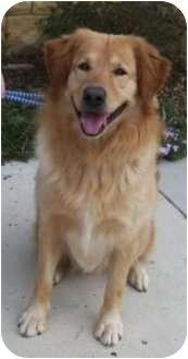 Golden Retriever Mix Dog for adoption in Huntsville, Alabama - Frisbee