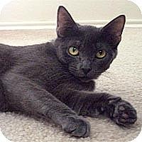 Adopt A Pet :: Sasha - Round Rock, TX