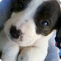 Adopt A Pet :: Keeper - Only $95 adoption! - Litchfield Park, AZ