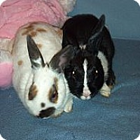 Adopt A Pet :: Marie - Wethersfield, CT