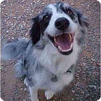 Adopt A Pet :: Banjo - Mesa, AZ