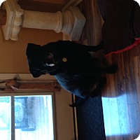 Adopt A Pet :: Maisy - Salem, MA