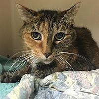 Adopt A Pet :: Alice - Saylorsburg, PA