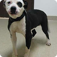 Adopt A Pet :: Snoopy - Gary, IN
