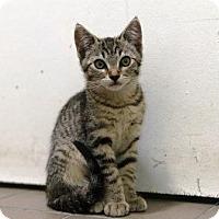 Adopt A Pet :: Serena - Lathrop, CA