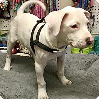Adopt A Pet :: Mikos - Phoenix, AZ