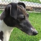 Adopt A Pet :: Jemma