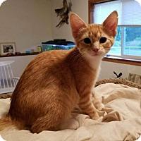 Adopt A Pet :: Nalla - Princeton, MN