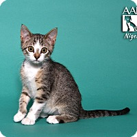 Adopt A Pet :: Nigel - Tomball, TX